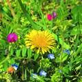 緑の中に咲く色とりどりの花