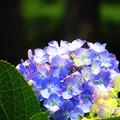 Photos: 輝く花たち