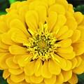 極彩色 黄色の花