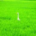 写真: 緑色の世界