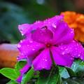 写真: 雨の日 3