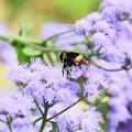 Photos: 秋色 紫2