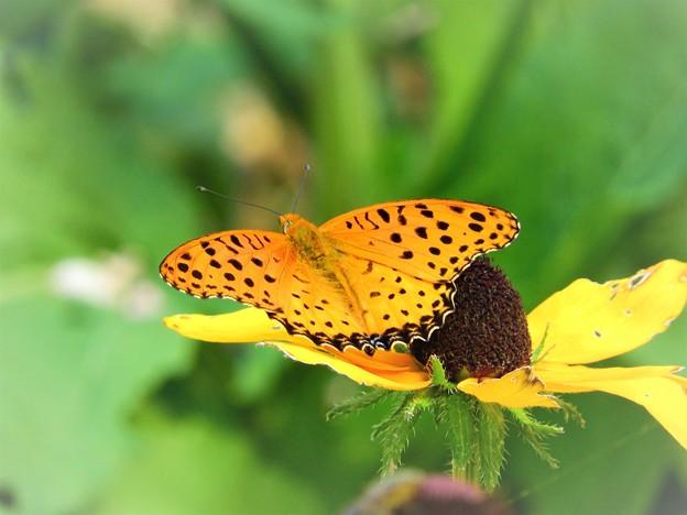 Photos: 花の上の生き物たち蝶
