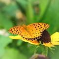 花の上の生き物たち蝶