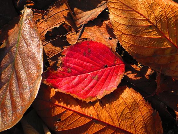 秋に見た風景 落ち葉