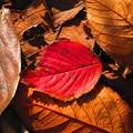 写真: 秋に見た風景 落ち葉