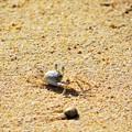 写真: 南の島の秋の風景 蟹