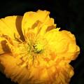 冬に観た花 映え
