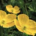 冬に観た花 5