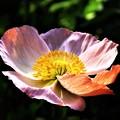 冬に観た花 春を待ちきれない