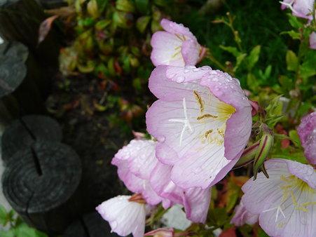 雨上がりのやさしさで・・(3) 語りかける花たち