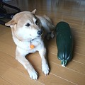 Photos: 友達になった気分