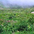 Photos: 白馬八方尾根の高山植物群生地
