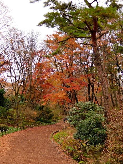 赤城自然園(3)