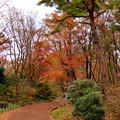 写真: 赤城自然園(3)
