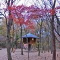 写真: 赤城自然園(6)