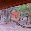 写真: 赤城自然園(7)