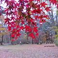 写真: 赤城自然園(9)
