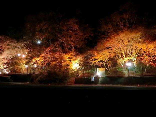 養老温泉ライトアップ(1)