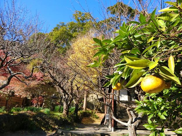 円覚寺境内の紅葉(2)