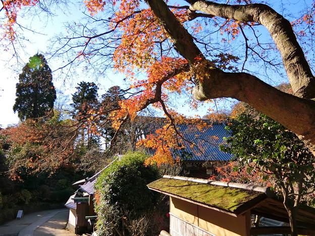 円覚寺境内の紅葉(6)