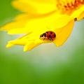 写真: 黄色い花の上