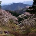 写真: 妙義山の春