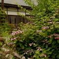 写真: 雨の法善寺