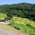 写真: 稲倉の棚田