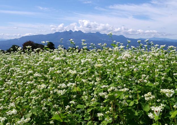 写真: 蕎麦の花♪