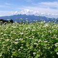 蕎麦の花♪