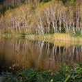 写真: 木戸池の秋