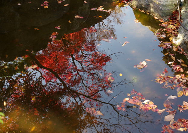 写真: 落葉