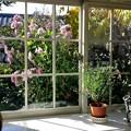 写真: 窓辺の風景♪