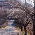写真: 桜山公園