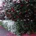 写真: 初雪♪