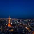 写真: 東京の夕顔