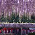 天王川公園 (20)