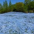 花フェスタ記念公園 (33)