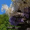 花フェスタ記念公園 (4)