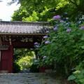 幸田町・本光寺 (6)