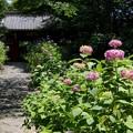 幸田町・本光寺 (3)