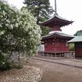 稲沢あじさい寺 (3)