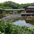 白鳥庭園 (7)