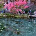 写真: モネの池 (1)