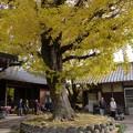写真: 祖父江イチョウ黄葉祭り (37)