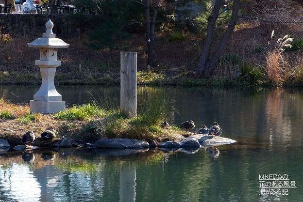 木曽川水園 (8)