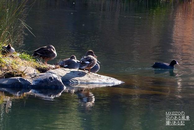 写真: 木曽川水園 (9)