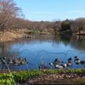 写真: 木曽川水園 (11)