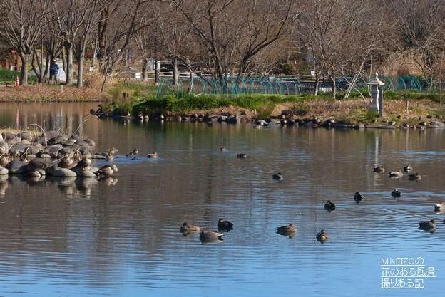 木曽川水園 (12)